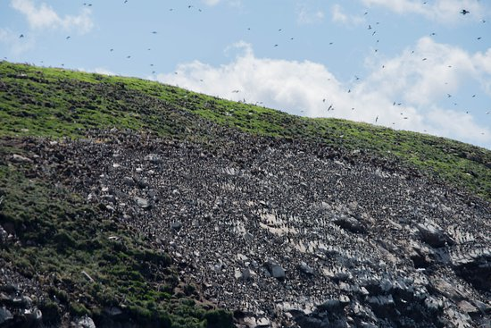 Bay Bulls, Canada: More seabirds