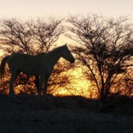 Our basotho horses