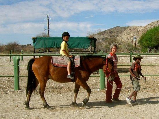 Karibib, Namibia: Our basotho horses take riders of all ages