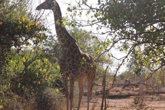 Kasane, Botsuana: chope natioanl park