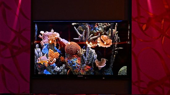 Bohem Art Hotel: Aquarium du Bar