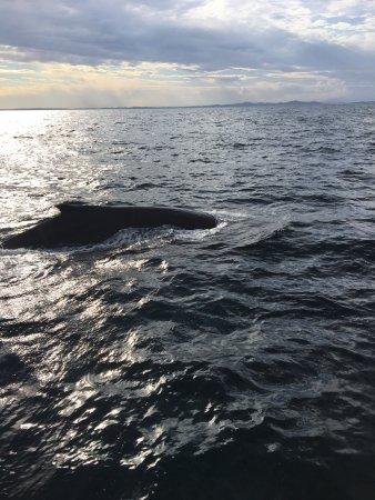 Nelson Bay, Australia: photo0.jpg