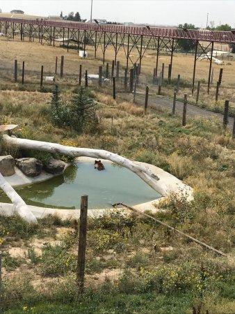 The Wild Animal Sanctuary: photo8.jpg