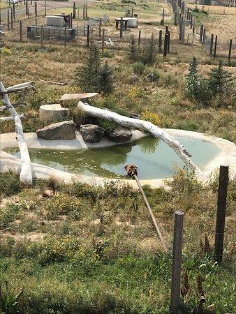 The Wild Animal Sanctuary: photo9.jpg