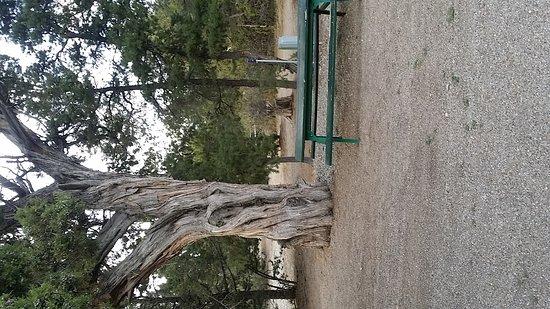Mancos, CO: 20170909_182714_large.jpg