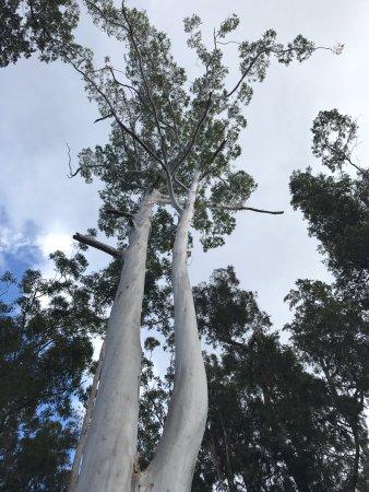 Paluma, Australia: photo5.jpg