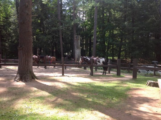 Lake Luzerne, NY: A few of the horses at Bennetts