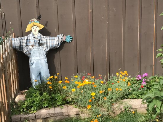 Glen Haven's scarecrow and poppies