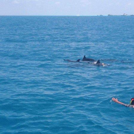 Maafushi Island: IMG_20170326_182843_097_large.jpg