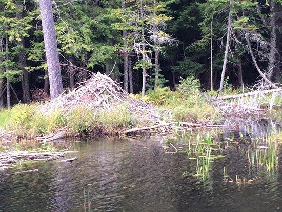 Blue Mountain Lake Boat Livery: photo2.jpg