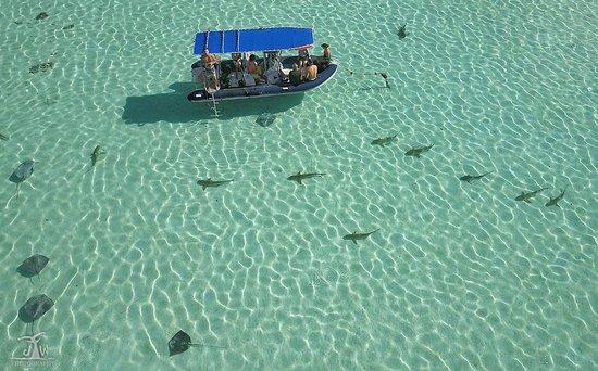 Haapiti, Polinezja Francuska: org_20abe2f880cf5f01_1505242032000-01_wm_large.jpg