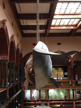 Bishop Museum: photo2.jpg