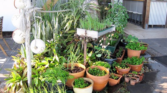 Amity, Australia: Lisa has a herb garden for you to use - how good is that?