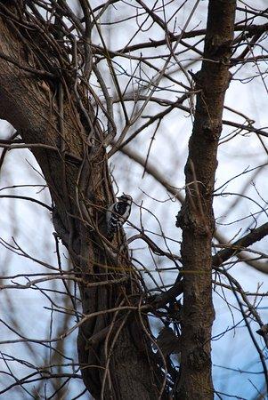 Edwardsville, IL: birds