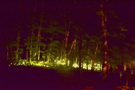 Foresta Lumina: Light show
