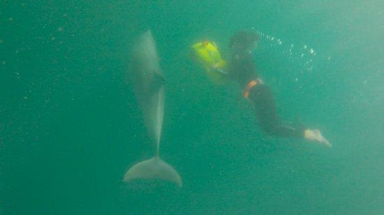 Rockingham Wild Encounters: Dolphin Swim
