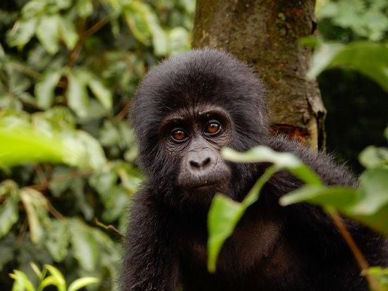 Foto de African Pearl Safaris