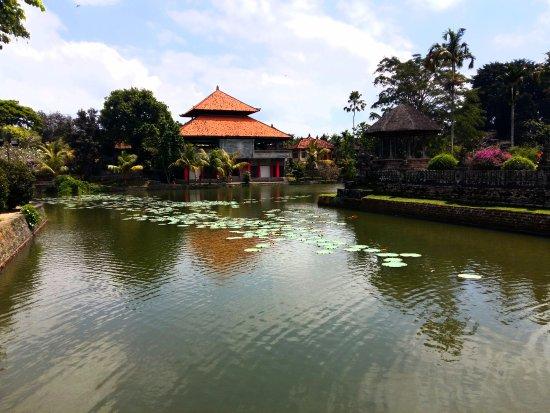 Mengwi, Indonésie : Lilypad pond view