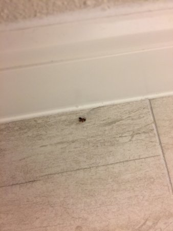 Villa Victor, an Ascend Hotel Collection Member: Bug in bathroom floor, we also saw hair and dirt in the entry way.