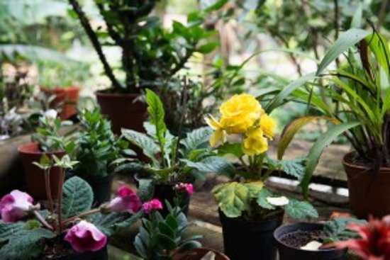 San Ramon, Costa Rica: Flores del campo
