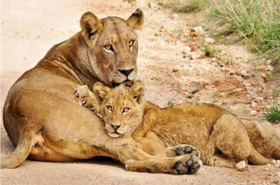 South Africa 14-Day Tour from...