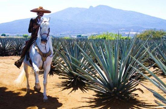 Torri di giornata intera e tequila da