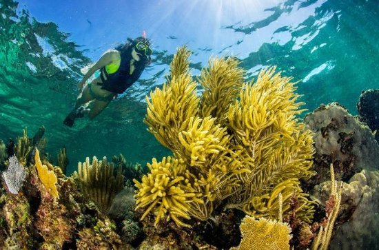 Snorkeling Adventure at Puerto ...