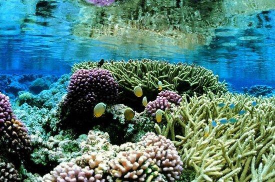 Negombo Private Snorkeling Tour
