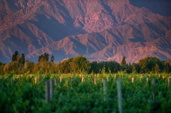 Cafayate Wine Route Day Tour from