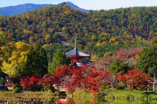 Høstblad: Small-Group Arashiyama og...