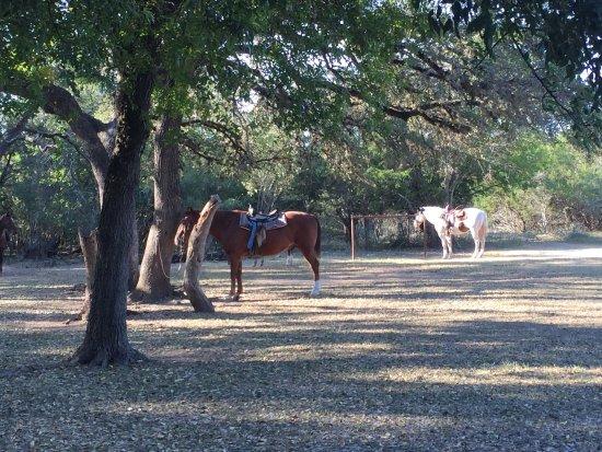 Mayan Dude Ranch: photo2.jpg
