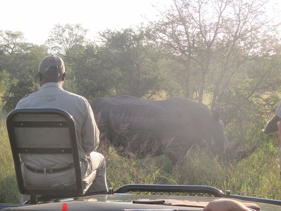 Ngala Private Game Reserve, South Africa: Up close and personal with a rhino