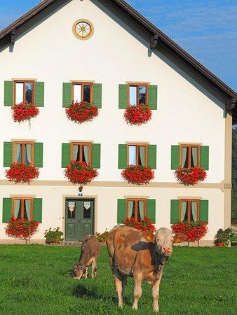 Steingaden Foto