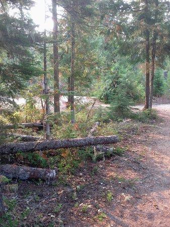 Wells Gray Provincial Park: Fallen trees
