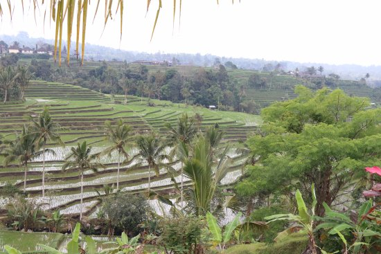 Tanjung Benoa, Indonesia: Rice fields