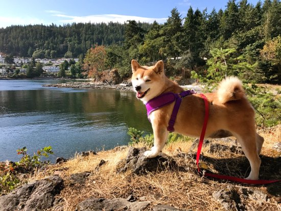 Nanaimo, كندا: Neck Point Park is a amazing place in Nanaimo. The wonderful views, great walking track and dogs