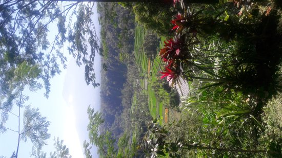 Tulamben, Indonesien: Rice fields