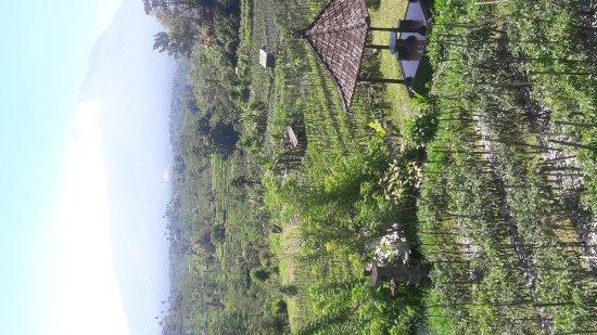 Tulamben, Indonesia: Rice fields