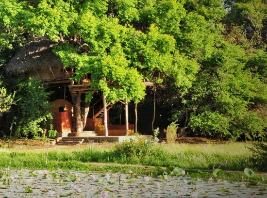 Back of Beyond - Dehigaha Ela: Damba tree house