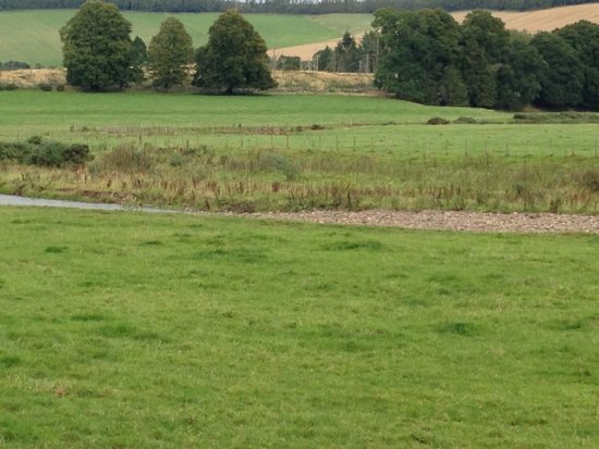 Thirlestane Castle: A view from the woodland and riverside walk