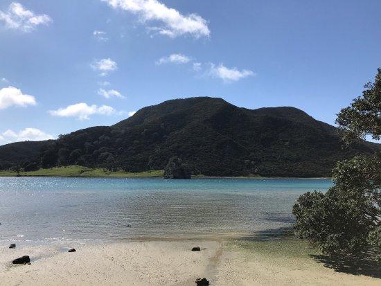 Пайхия, Новая Зеландия: photo3.jpg