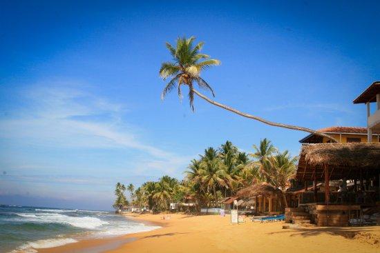 Indigo Ocean Travels