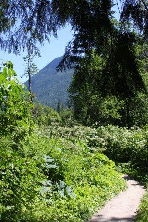 Skunk Cabbage Boardwalk: A trail view.