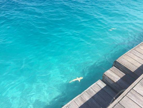Conrad maldives rangali island desde s 2 373 maldivas for Viajes rangali opiniones