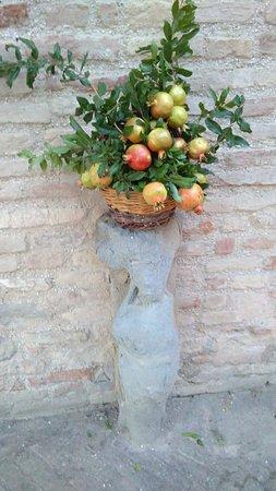 Arcevia, Italy: IMG_20170815_200555_large.jpg