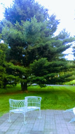 Pine Grove Mills, Pensilvania: The patio, a love seat...and the New Split White Pine tree. East yard, looking towards the front