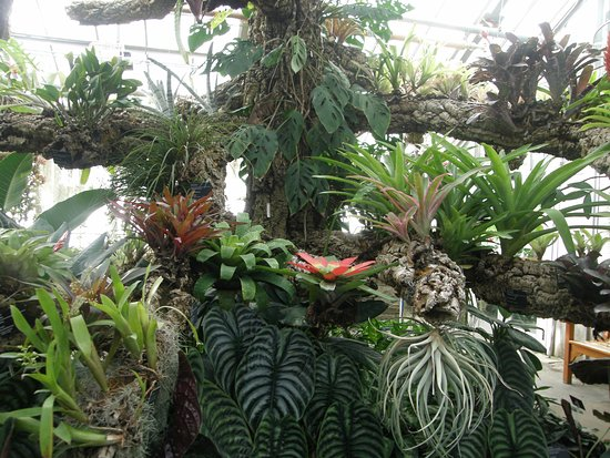 Montreal, Canadá: Bromeliads and staghorns