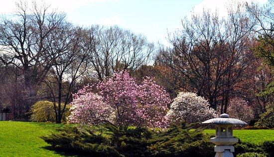 Montreal Botanical Gardens: Spring Time In Montreal Botanical Garden