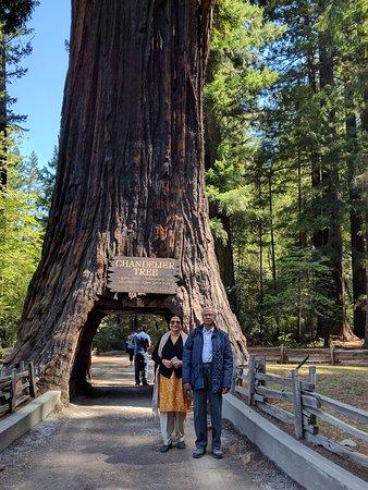 Leggett, CA: Road through the tree
