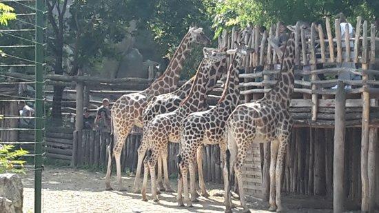 Budapest Zoo & Botanical Garden: 20170910_141235_large.jpg